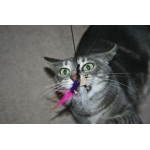 Purrs Locust ClipOn - Fits PurrSuit, Frenzy & Da Bird Cat wand Toys