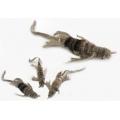 Purrs Lennie Lizard ClipOn prey - Fits PurrSuit, Frenzy & DaBird Rods