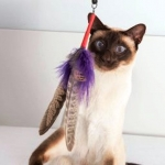 PurrSuit Interchangeable Cat Toy LONG with Spinning Feather prey, Safer Clip