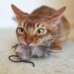 Purrs Mouse Attachment - Fits PurrSuit, Frenzy & DaBird Rods